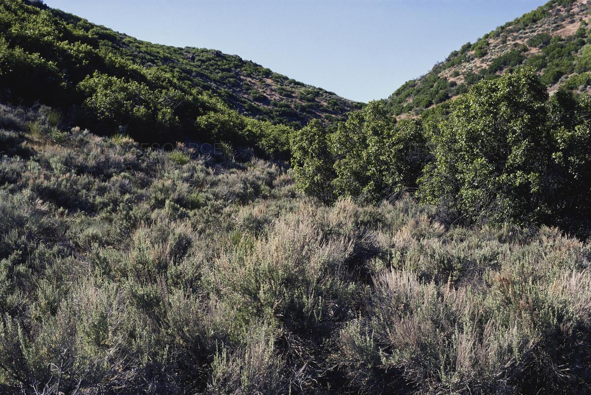 Scrubland in Utah
